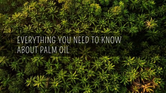 what is palm oi and why it palm oil bad for the environment