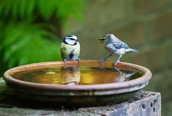 bird bath in a sustainable garden