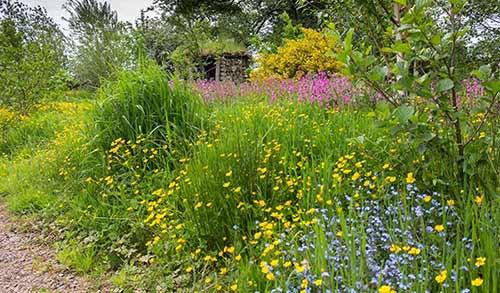 sustainable garden full of uk wildflowers